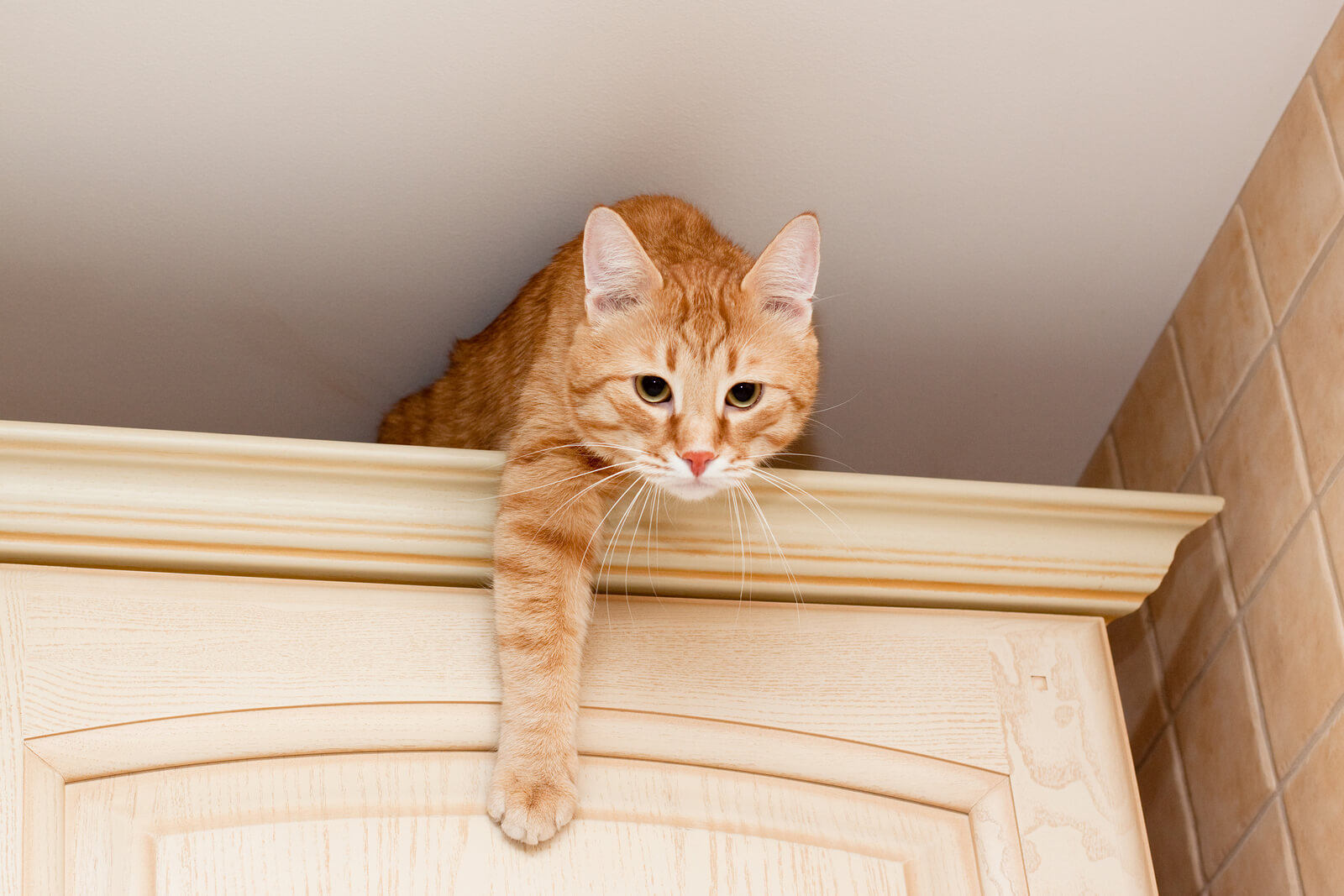 Why Cats Jump & How to Control It | Hill's Pet