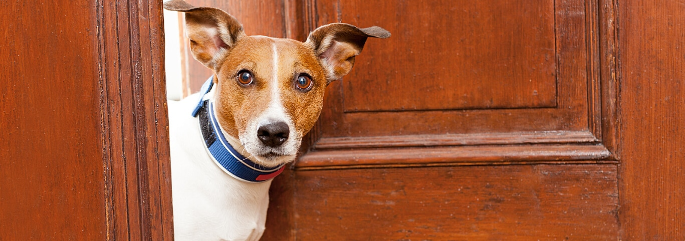 Check out these helpful tips on how to housebreak your puppy and feel confident in leaving him alone while you're at work.
