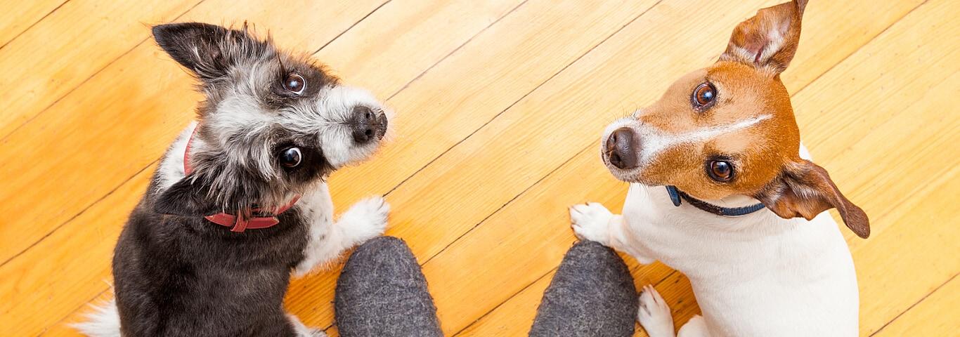 Return Hiell Dog Training