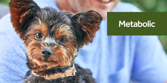 Prescription Diet Dog Food Therapeutic Nutrition Hill S Pet