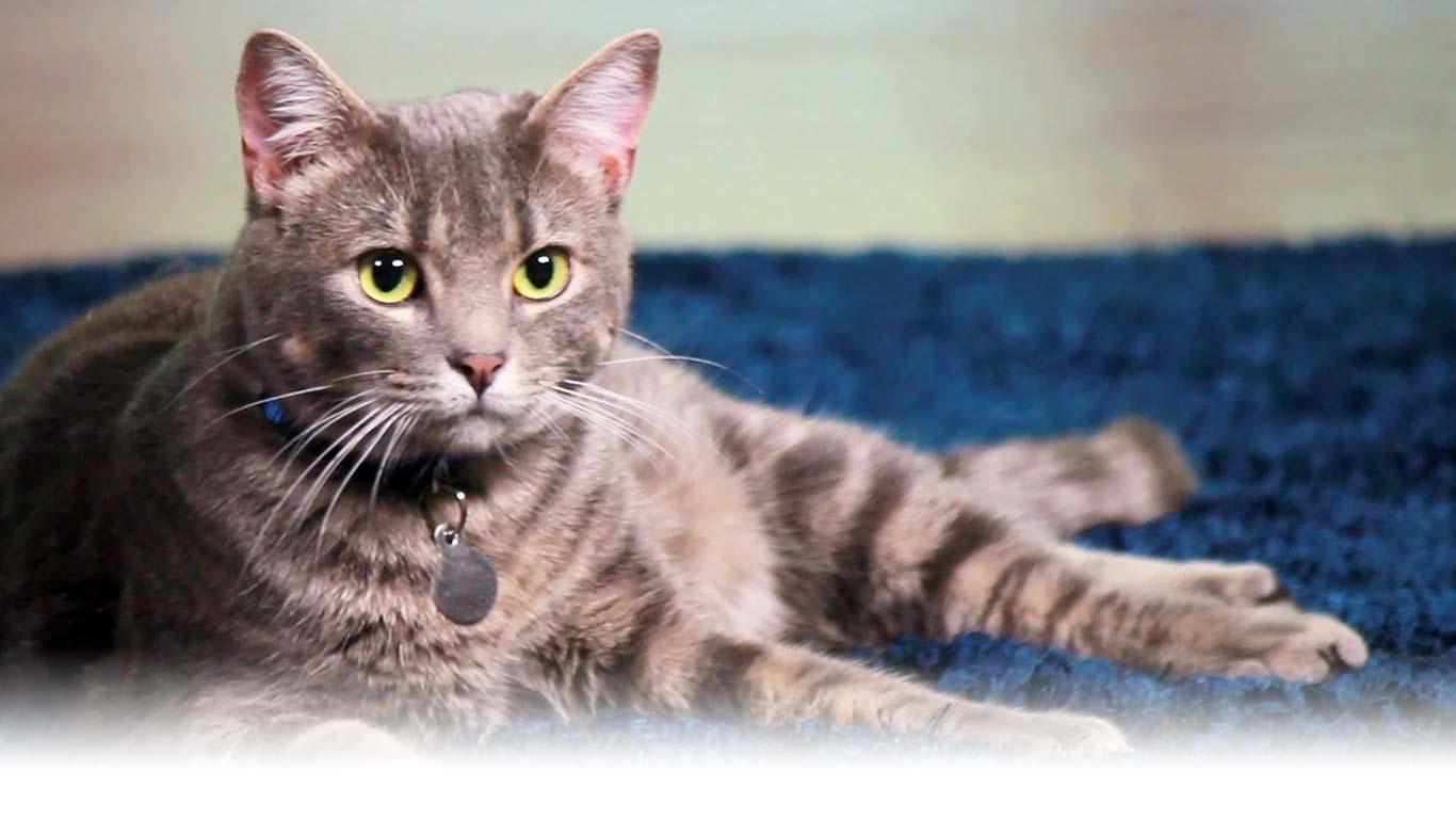Hill\'s Pet Nutrition - Dog & Cat Food Transforming Lives