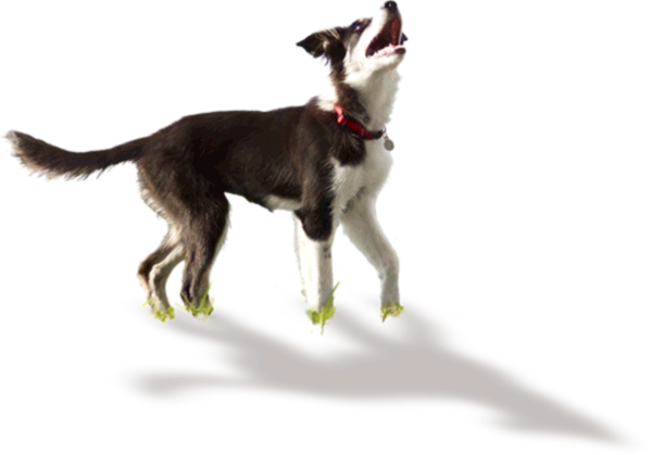 Ideal Balance Dog Food >> Science Diet - Youthful Vitality for Your 7+ Dog | Hill's Pet