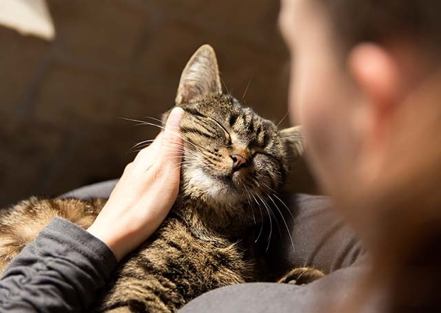 Hills Cat Food For Cats With Thyroid Problems