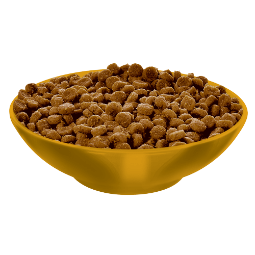 Cat Kibble Science Diet Cat Food